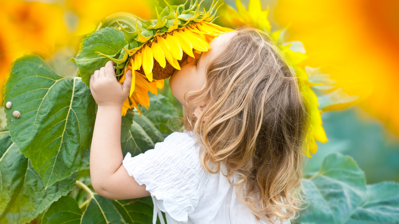 baby smelling sunflower