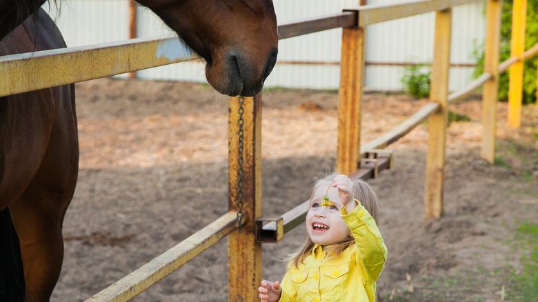 little girl giving dandelion to a horse