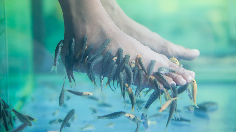 The untold truth of fish spa pedicures for Fish eating dead skin pedicure
